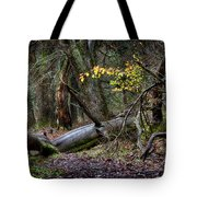 New Growth In An Old Forest Tote Bag