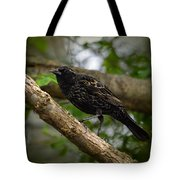 Red Winged Blackbird - New Heights - 06.04.2014 Tote Bag