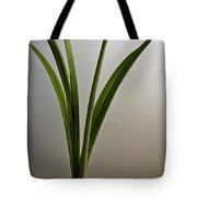 An Emerging Amaryllis Tote Bag