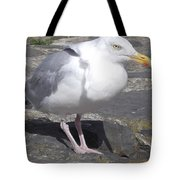New Quay Gull 1 Tote Bag