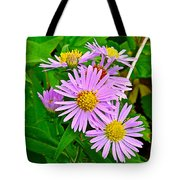 New York Asters In Flower's Cove-newfoundland Tote Bag