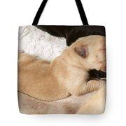 Newborn Labrador Puppy Suckling Tote Bag