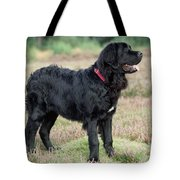 Newfoundland Dog, Standing In Field Tote Bag