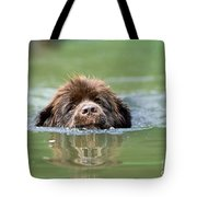 Newfoundland Dog, Swimming In River Tote Bag