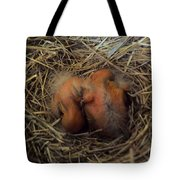 Newly Born Tote Bag by Robyn King