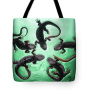 Newts  Pleurodelinae  On The Surface Tote Bag