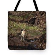 Night Heron At Corroboree Billabong Tote Bag
