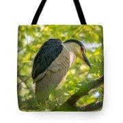 Night Heron At Rest Tote Bag
