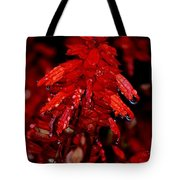 Night Of Glistening Red Salvia Tote Bag