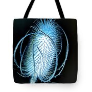 Night Teazle Tote Bag