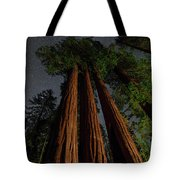 Night View Of Giant Sequoia Trees Tote Bag