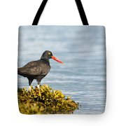 No Bird Is An Island Tote Bag