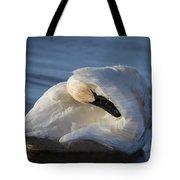Swan Tuck Tote Bag