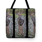 Curious Yearling Deer Tote Bag