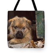 Norfolk Terrier Puppy By Barn Door Tote Bag