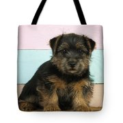 Norfolk Terrier Puppy Dog, Sitting Tote Bag