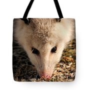 North American Opossum In Winter Tote Bag