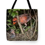 Northern Cardinal At Nest Tote Bag