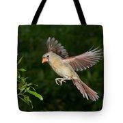 Northern Cardinal Hen Tote Bag