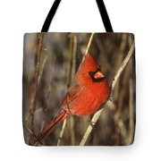 Northern Cardinal Male Long Island Tote Bag