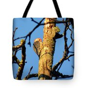 Northern Flicker At Sunrise Tote Bag