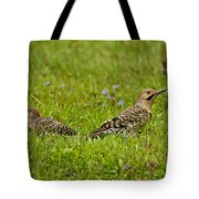 Northern Flicker Pictures 42 Tote Bag