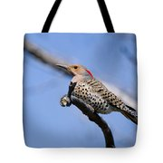 Northern Flicker Pictures 5 Tote Bag