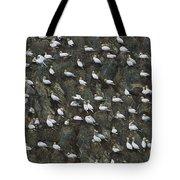Northern Gannet Colony Shetland Islands Tote Bag
