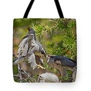 Northern Goshawk Brings Prey To Nest Tote Bag