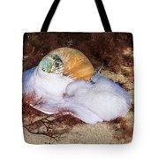 Northern Moon Snail Tote Bag