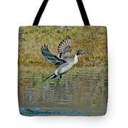 Northern Pintail Drake Taking Tote Bag
