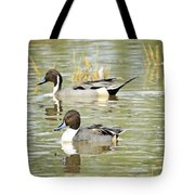 Northern Pintail Ducks  Tote Bag