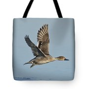 Northern Pintail Hen Tote Bag