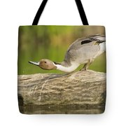 Northern Pintail  Tote Bag
