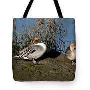 Northern Pintail Pair At Rest Tote Bag