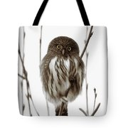 Northern Pygmy Owl - Little One Tote Bag