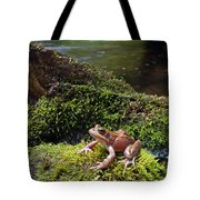 Northern Red-legged Frog Tote Bag
