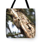Northern Red Shafted Flicker Tote Bag