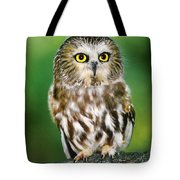 Northern Saw-whet Owl Aegolius Acadicus Wildlife Rescue Tote Bag