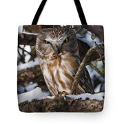 Northern Saw-whet Owl.. Tote Bag