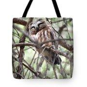 Northern Saw-whet Owl  Tote Bag