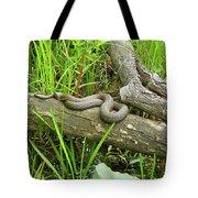 Northern Water Snake - Nerodia Sipedon Tote Bag