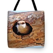 Nuthatch Bird In Nest Tote Bag