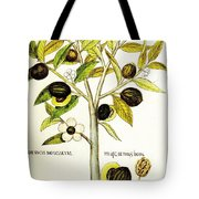 Nutmeg Plant Botanical Tote Bag