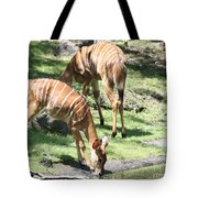 Nyalas At The Watering Hole Tote Bag