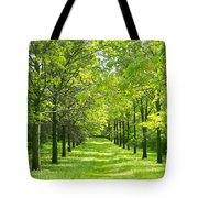 Oak Allee Tote Bag