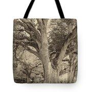 Oak Alley Backyard Seoia Tote Bag