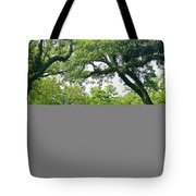 Oak Alley Trees Tote Bag