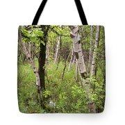 Oak And Birch Tote Bag