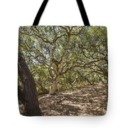 Oak Forest - The Magical And Mysterious Trees Of The Los Osos Oak Reserve Tote Bag